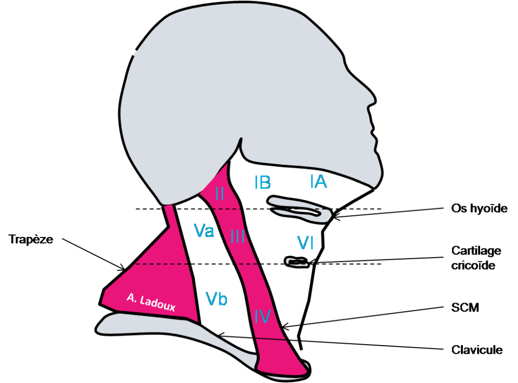anatomie lymphatique cervicale