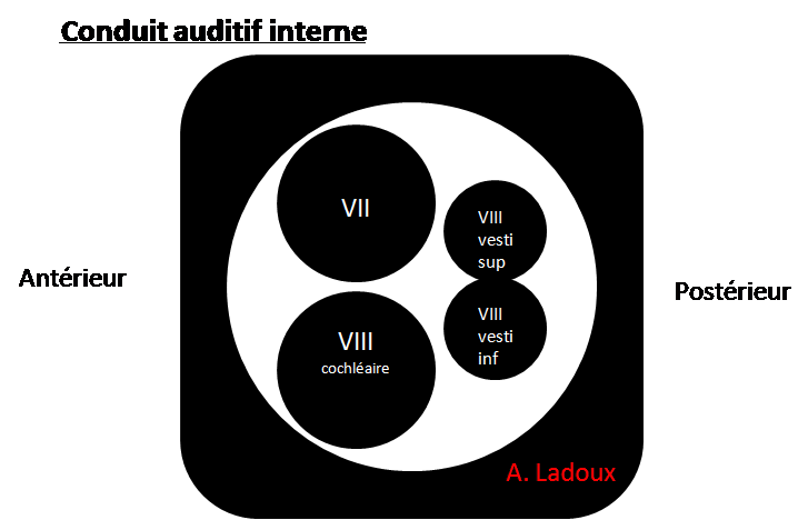 conduit auditif interne